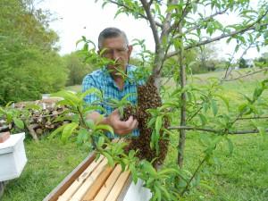 First swarm 2011